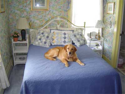 mattress cleaning va dog