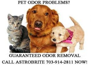 Northern Virginia Carpet Pet Odor Removal VA
