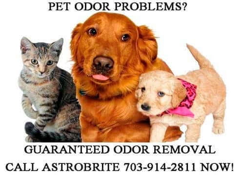 Northern Virginia Carpet Pet Odor Removal Va Arlington