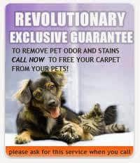 Northern Virginia Carpet Pet Odor Removal VA special