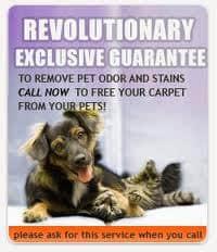 Northern Virginia Carpet Pet Odor Removal VA special