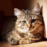 cat urine remover