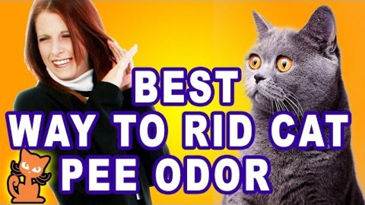 Get Rid of Cat Pee Smell: Insider