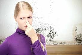 How to Remove Household Odors