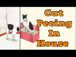 How To Get Rid of Cat Urine Odor In House